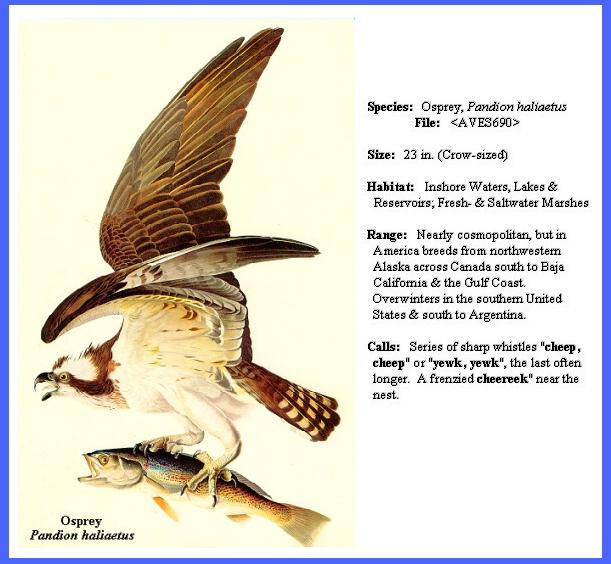 Predatory Amp Scavenger Birds